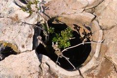 kamienny drzewo Zdjęcia Stock
