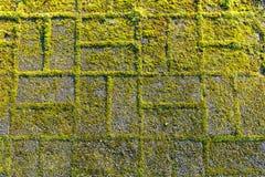 Kamienny footpath z mech, zakończenie w górę wizerunku obrazy stock