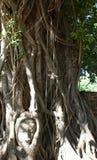 Kamienny kierowniczy opleciony w drzewnych korzeniach obraz stock