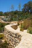 Kamienny kraju ogrodzenie i agaw rośliny na południowym wybrzeżu Malta Obrazy Stock