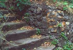 Kamienny kroka ślad w drewnach Zdjęcia Stock