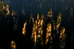 Kamienny las z światłem słonecznym obrazy stock
