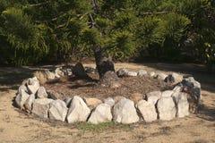 Kamienny obramowany ogród wokoło bagażnika jedlinowy drzewo wypełniał z rośliny ściółką obrazy stock