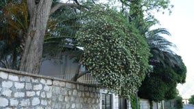Kamienny ogrodzenie w Montenegro blisko willi morskiej zbiory