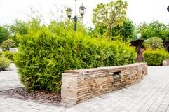 Kamienny ogrodzenie za którym r jaskrawego - zielona roślina w parku Ja jest latem outside obrazy stock