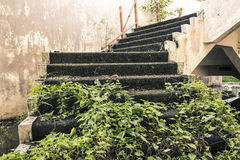 Kamienny schody wypełniający z trawą Obrazy Royalty Free