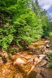 Kamienny strumień w górach Beskid Zdjęcie Stock