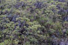 Kamienny zbocze góry z drzewami zdjęcia royalty free