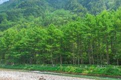 Kamikochi i Nagano, Japan Arkivbild