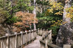 Kamikochi-Naturlehrpfade mit Baum in forrest w?hrend der Herbstsaison durch h?lzernes walkpath stockfotos