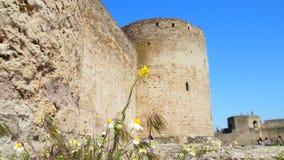 Kamille auf dem Hintergrund einer alten Festung lizenzfreie stockbilder