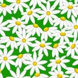 Kamille auf einem grünen Hintergrund Muster nahtlos Stockfotos