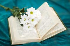 Kamille blüht im offenen russischen Buch auf cyan-blauem Gewebe stockfoto