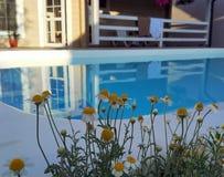 Kamille blüht nahe Pool und Haus stockfotos