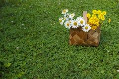 Kamille in einem Korb Lizenzfreie Stockbilder