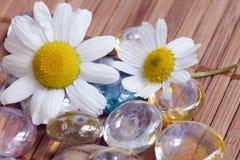 Kamille en kiezelsteen Stock Afbeelding