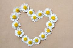 Kamille, hart, patroon van madeliefjes Royalty-vrije Stock Foto's