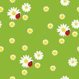 Kamille met onzelieveheersbeestjes op een groene achtergrond Royalty-vrije Stock Afbeelding