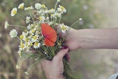 Kamille und Mohnblume in ihren Händen Stockfotos