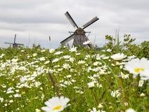 Kamille und Windmühlen am bewölkten Tag Lizenzfreies Stockbild