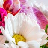 Kamille unter Rosen und Orchideen Stockfoto