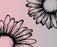 Kamillebloemen - close-up Stock Afbeelding