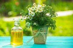 Kamilleetherische olie in een glasfles Een madeliefjebloem in een turfpot Natuurlijke schoonheidsmiddelen Stock Foto