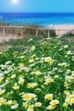 Kamillegebied en groen gras op een achtergrond van het overzees. Royalty-vrije Stock Afbeelding