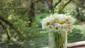 Kamillenanimation in den cinemagraph Techniken Weiße Blumen im Glasvase an einem Sommertag auf dem Hintergrund vom alten stock video footage