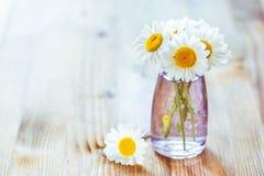 Kamillenblumen Stockfoto