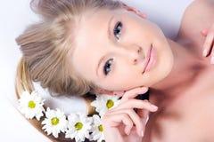 Kamillenblumen Stockbilder