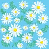 Kamillenblumen auf einem blauen Hintergrund Nahtlose Vektor-Illustrationen Kamillen-Blumen für Verkauf Stockbild