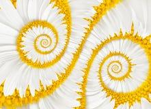 Kamillenblumen-Unendlichkeitsspirale Stockfotos