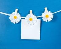 Kamillenblumenwäscheklammern mit leerem Papier auf blauem Hintergrund Stockbild