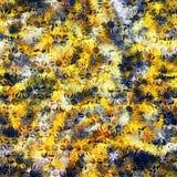 Kamillenfarbe Stockbilder