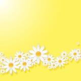 Kamillenhintergrund Lizenzfreie Stockfotografie