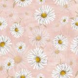 Kamillepatroon op roze achtergrond Royalty-vrije Stock Afbeeldingen