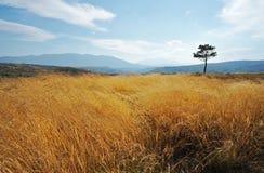 Alone tree in grass field  Stock Image