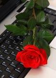 kłamliwa czerwona róża komputerowa Zdjęcie Stock