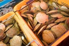 Kamm-Muschel für das Kochen Stockbild
