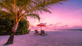 Kamm-MuschelSeashell auf Rosa Schöne Strandlandschaft Tropische Naturszene Palmen und blauer Himmel Sommerferien und Ferienkonzep stockfoto
