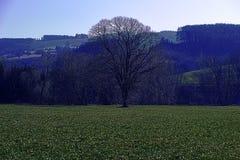 Kammerhof an März-Kreuz verarbeitet Stockfotos