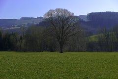 Kammerhof przy Marzec Zdjęcia Royalty Free