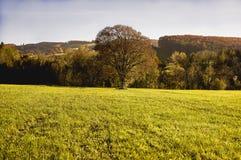 Kammerhof w jesieni Obraz Stock