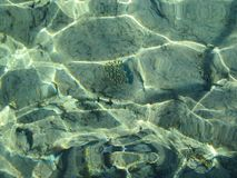 Kammussla och korallrever som är längst ner av Röda havet tropiskt undervattens- vatten för egypt fotografi royaltyfria foton