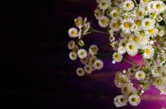 Kamomillar blommar på purpurfärgad träbakgrund Fritt avstånd för din text royaltyfria foton