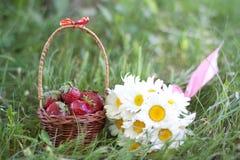Kamomillar och jordgubbar Arkivbilder