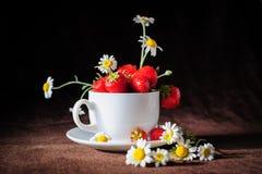 Kamomillar och jordgubbar i koppen Arkivbilder