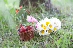 Kamomillar och jordgubbe Royaltyfri Fotografi