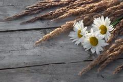 Kamomillar och lösa sädes- gräs på träbakgrund Royaltyfri Fotografi
